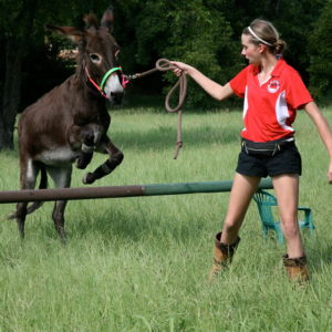 donkey_jumping_by_horseloverry-d7xhhay