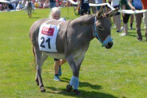 Register to Race,Donkey Derby