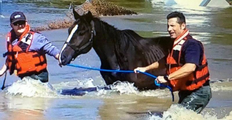 HT_horse_rescue_jef_161011_12x5_992
